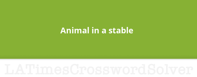 Animal in a stable crossword clue